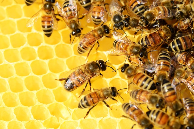 Fotos abejas